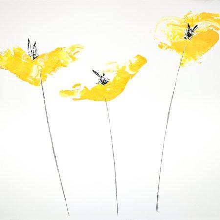 Yellow poppies, amapolas amarillas